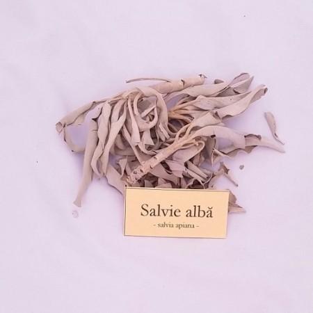 Salvia alba, ramurele, Salvia Apiana, crengute